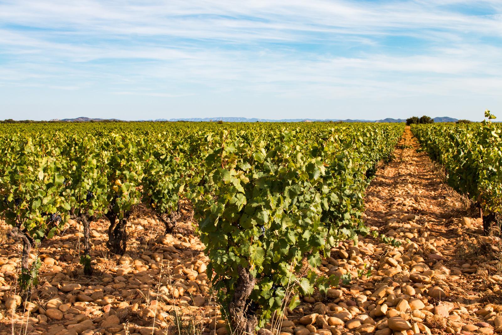 Des vignes au coeur du Sud de la France