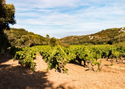 Our terroir reflects the history of the Rhone river